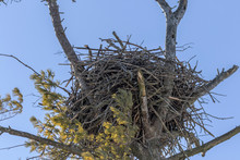 The Bald Eagle's Nest In A State Park In Wisconsin