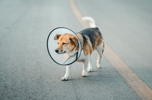 Dog Wearing Collar Neck In The...