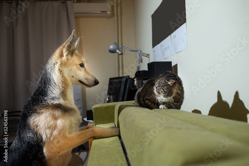 Playful dog acquainting with old cat at home Canvas Print