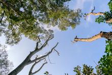 Beautiful Dry Tree With Sky Ba...