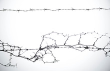 Closeup Of Spiral Barbed Wire ...