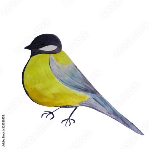 titmouse-ptasia-akwareli-ilustracja