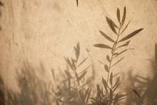 Olive Tree Leaves Shadows On T...