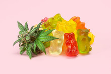 Gummy Bear Medical Marijuana Edibles, Candies Infused With CBD Or THC, With Cannabis Bud Isolated On Pink Background