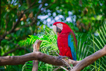 Portrait Of Colorful Scarlet M...