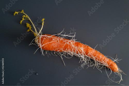 une carotte envahie par les racines Slika na platnu
