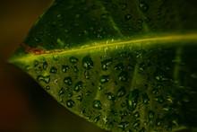 Large Beautiful Drops Of Trans...