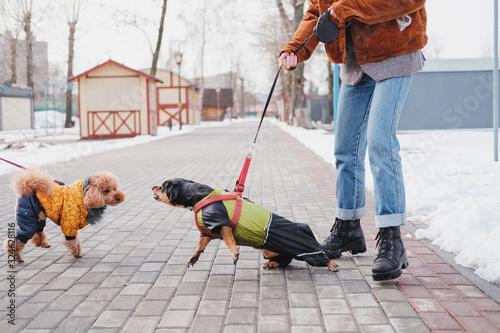 Valokuva Aggressive, disobedient dog problems concept