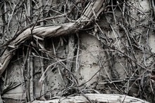 Halloween Old Wall Plant Creep...