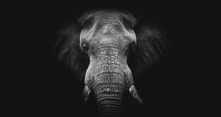 Slon na crnoj, crno-bijela umjetnost