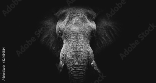Elephant on black, fine art B&W