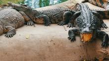 Crocodile Farm In Pattaya Thai...