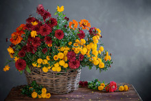 Still Life With Chrysanthemums In Basket  On Wooden Shelf
