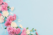 White And Pink Chrysanthemums ...