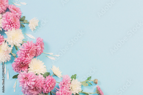Fotografia white and pink chrysanthemums on blue paper background
