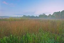Landscape At Sunrise Of Tall Grass Prairie, Fort Custer State Park, Michigan, USA