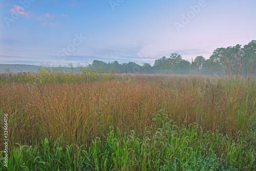 Fotografie, Tablou Landscape at sunrise of tall grass prairie, Fort Custer State Park, Michigan, US
