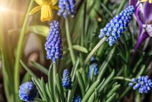 Garden Of Of Blooming Various ...