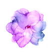 Delicate hand drawn watercolor flower in violet and pink tones. Alcohol ink art. Raster illustration.