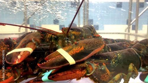 Fototapeta Un homard rouge dans l'aquarium d'une poissonnerie  obraz