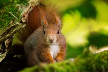 Closeup shot of a cute squirrel staring at the camera with a blurred background