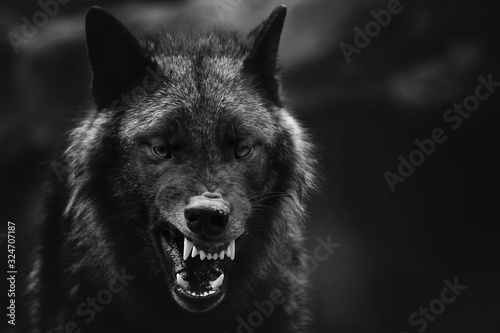 Photo Greyscale closeup shot of an angry wolf with a blurred background