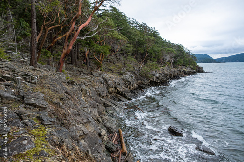 Photo couple Arbutus tree on the edge of the cliff in front of the forest by the coast with few leaves on the tip of the branches facing the ocean under cloudy weather