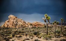 Landscape Of Joshua Tree Natio...