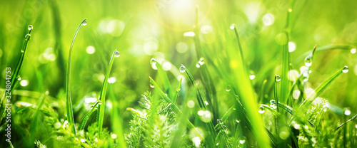 Fresh juicy young grass in droplets of morning dew, spring on a nature macro Wallpaper Mural