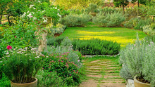 Cottage Garden On Green Grass Lawn Backyard, Landscape Decorate With Roses, Rosemary Herb, Lavender, Flowering Plant,  Greenery Trees In Charming Edible Gardens And Good Maintenance Landscaping