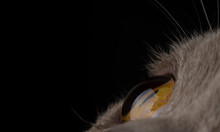 Yellow Cat Eye Close Up. Macro...