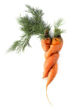 Funny Carrots Couple