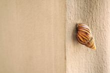 Garden Snail Stick And Sleep O...