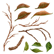 Watercolor  Twigs And Leaves S...