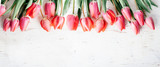 Fototapeta Tulips - Pink tulips bouquet border on white wooden background from above. Top view of red flower bud frame. Spring seasonal holiday and easter greeting card design layout.