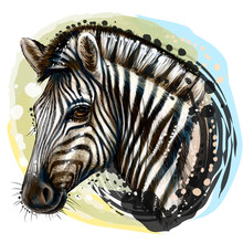 Zebra.  Sketchy, Realistic, Color Portrait Of Zebra On A White Background With Splashes Of Watercolor.