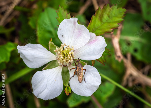Fotografija Southern Dewberry with a visitor along the nature trail in Pearland!