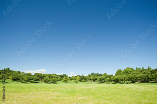 Fototapeta 青空と芝生の公園 obraz