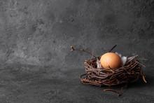 Easter Egg In Nest On Black Background