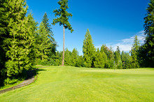 The Golf Course With Green Gra...