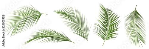 Obraz Set of tropical leaves on white background - fototapety do salonu