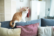 Red And White Cat Sitting On S...