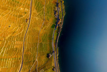 Aerial View Of Vineyards And L...