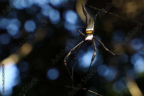 Photo arachnophobia
