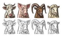 Farm Animals Icon Set. Pig, Co...