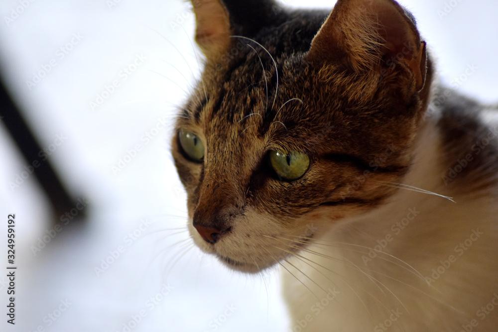 Fototapeta Gato felino