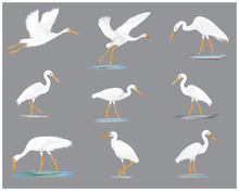 Isolated White Heron Vector De...