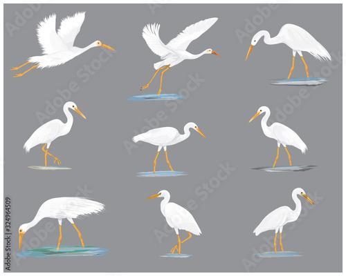 isolated white heron vector design Canvas Print