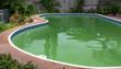 Leinwanddruck Bild - green dirty pool algae water in a suburban backyard