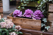 Decorative Purple And White Ca...
